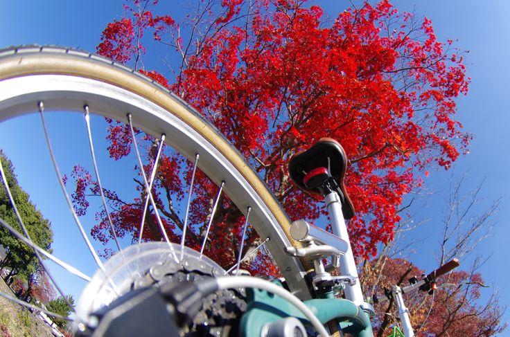 Copyright © いわごん 様 / Boardwalk 2013 / 妻とのポタリングのため同時期に2台購入しました。週末は近場の京都近辺をぷらぷらしています。Boardwalkの背景は嵐山で、Routeは鴨川の河原です。(わかりにくいですが・・・)