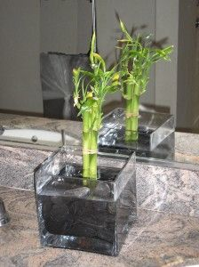 Learn about bamboo plants that can be grown indoors!