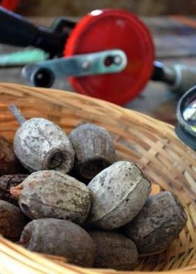 Hinterland Mama: Drilling gumnuts for future nature craft projects