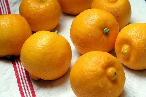 Bergamot (Sweet Lemon) Marmalade | David Lebovitz