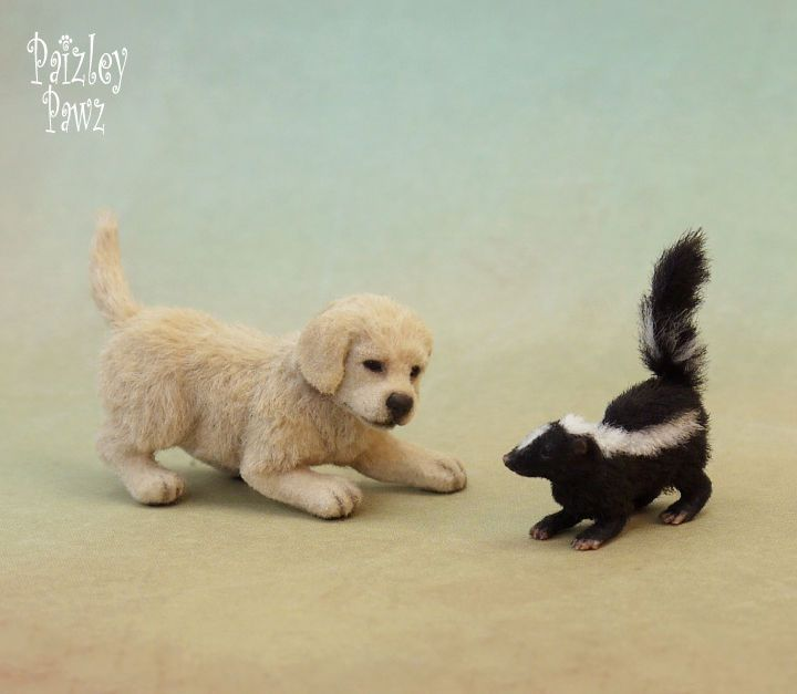 1000+ Ideas About Baby Skunks On Pinterest