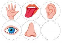 Органы чувств. Пять картинок
