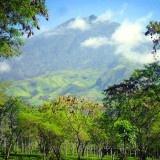 Wisata Agro Kebun Teh Wonosari Malang