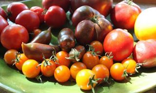 GPRS: Tomatoes