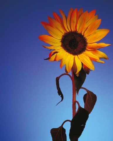 22 best Blumen - Flowers images on Pinterest | Art print, Calculus ...