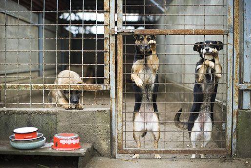 az állatmenhelyről