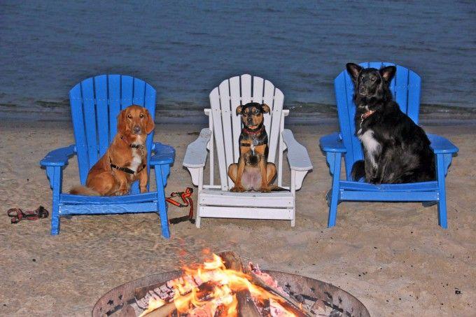 Dog Friendly Vacation Rentals Door County Wi