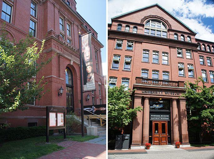 Deux musées à Harvard : le musée d'histoire naturelle et le musée Peabody.