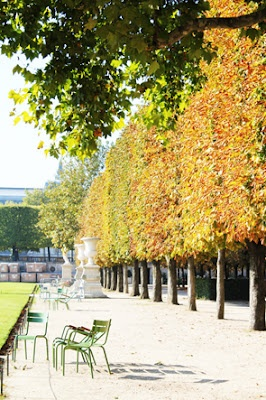 """The first thing I saw on my first walk in Paris was the """"square trees"""" that line the Tuileries right next to the Louvre. These trees are all over Paris - still don't know if this is the way they are trimmed or they just grow like this. They are amazing either way."""