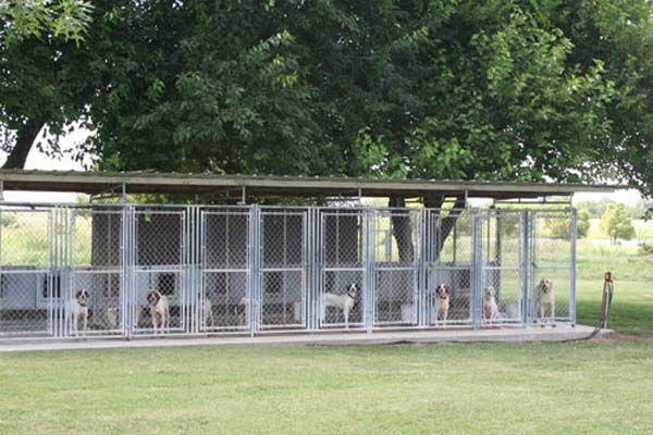 Multiple dog kennel dog kennels pinterest dogs and for Dog kennel shed combo plans