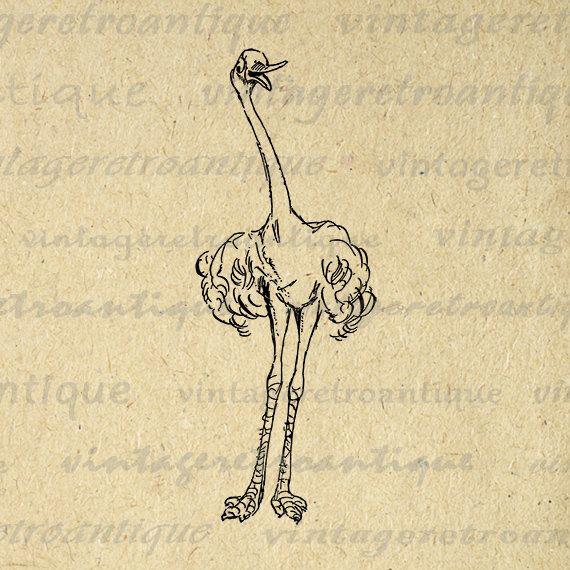Digital Image Friendly Ostrich Printable Graphic Cartoon Bird Illustration Download Antique Clip Art Jpg Png Eps 18x18 HQ 300dpi No.2862 @ vintageretroantique.etsy.com #DigitalArt #Printable #Art #VintageRetroAntique #Digital #Clipart #Download