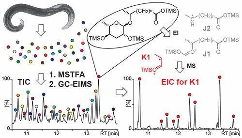 Ascaroside Profiling of Caenorhabditis elegans Using Gas Chromatography–Electron Ionization Mass Spectrometry