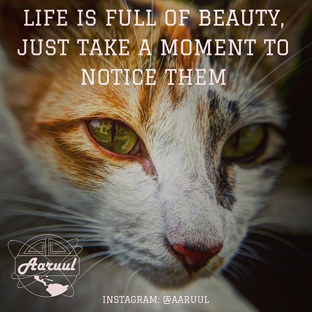 Life is full of beauty just take a moment to notice them #love #tbt #inspiration #passion #goal #motivation #hashtag #like4like #fashion #fitness #gym #persistence #car #cars #elite #fun #precious #aaruul #80s #retro #discipline #goodlife #cat #purr #smooth #soft #flexible #fast #beauty #beautiful @aaruul