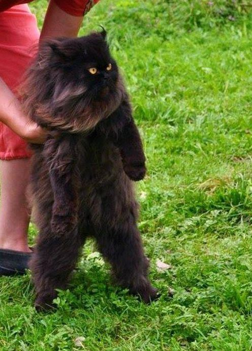 Fear me human, for I have learned how to walk…