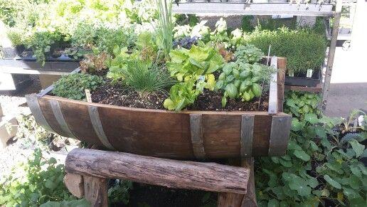 Wine barrel herb garden. Reusing!