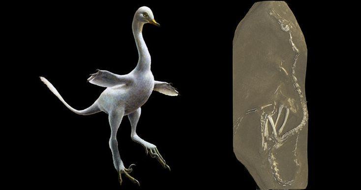 Новый вид настолько необычен, что международная группа палеонтологов отнесла его к новой группе динозавров Halszkaraptorinae.
