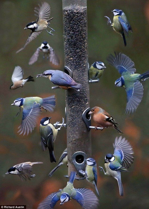 Time Lapse photo of birds feeding over a 5 minute period                                                                                                                                                     More