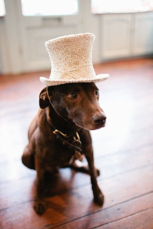 dachsund. top hat.