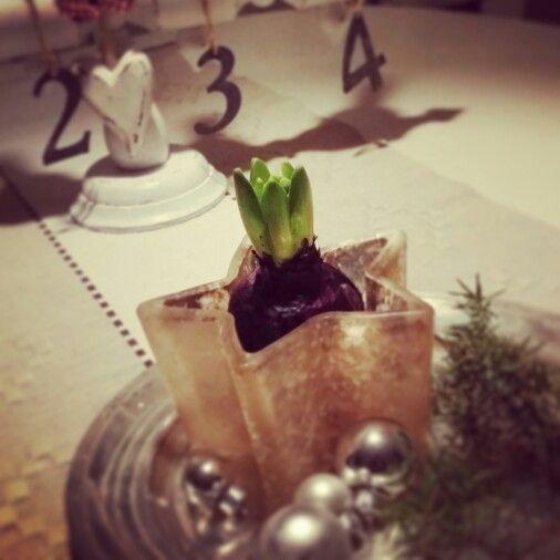 En liten hyacint, kan göra så mycket!  #jul #inspiration #hyacinth