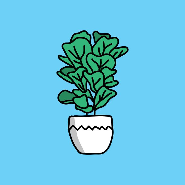 Fiddle Leaf Fig. It is my favourite plant in my house.  #Illustration #illustrate #design #graphicdesign #handmade #handdrawn #icon #logo #indoorplant #plant #fig #fiddleleaffig #potplant #sketchbook #doodle #doodles