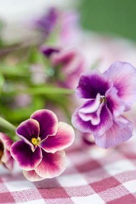 Blomsterverkstad: Penséer * Viola