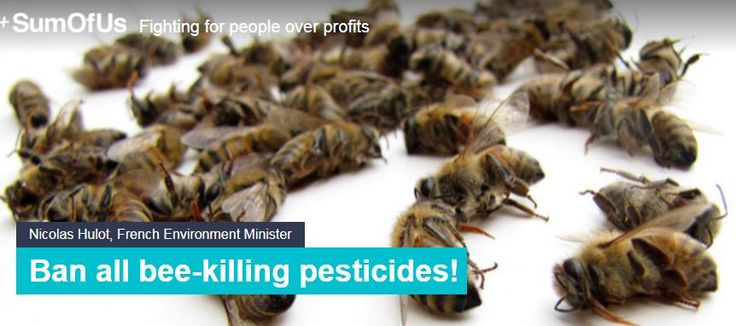 A new bee-killing pesticide - Sulfoxaflor - has just been approved in France  Let's get behind banning these bee killers while we have the chance!  https://actions.sumofus.org/a/ban-all-bee-killing-pesticides