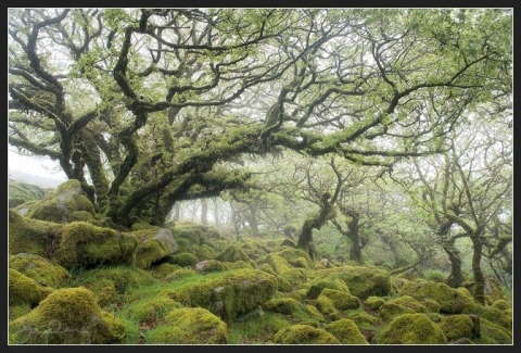fantastic-tree-photo: Mossy Forests, Wistman Woods, Amazing Photo, Devon England, Google Images, Awesome Natural, Amazing Trees, David Clapp, Oak Trees