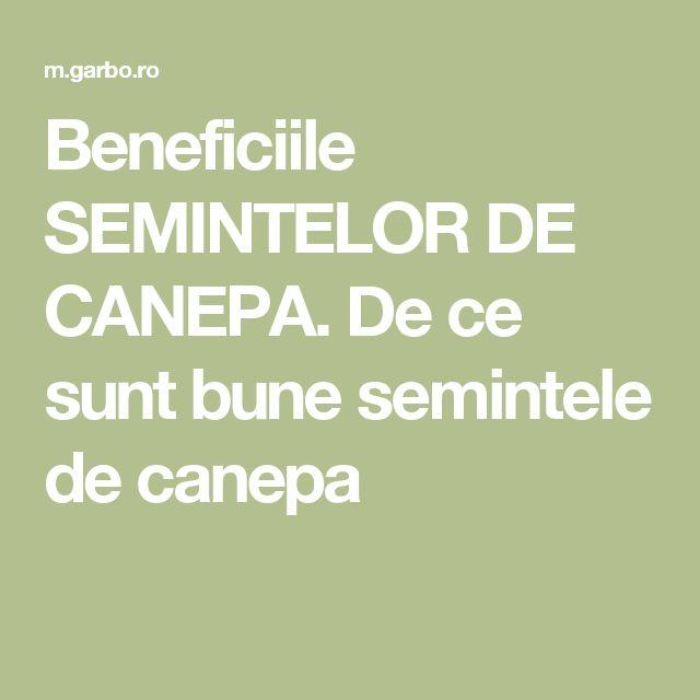 Beneficiile SEMINTELOR DE CANEPA. De ce sunt bune semintele de canepa
