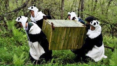 @thereaIbanksy  Jun 2 if u havent smiled today look at these photos of wild life workers dressing up as pandas 2 make baby pandas feel safe