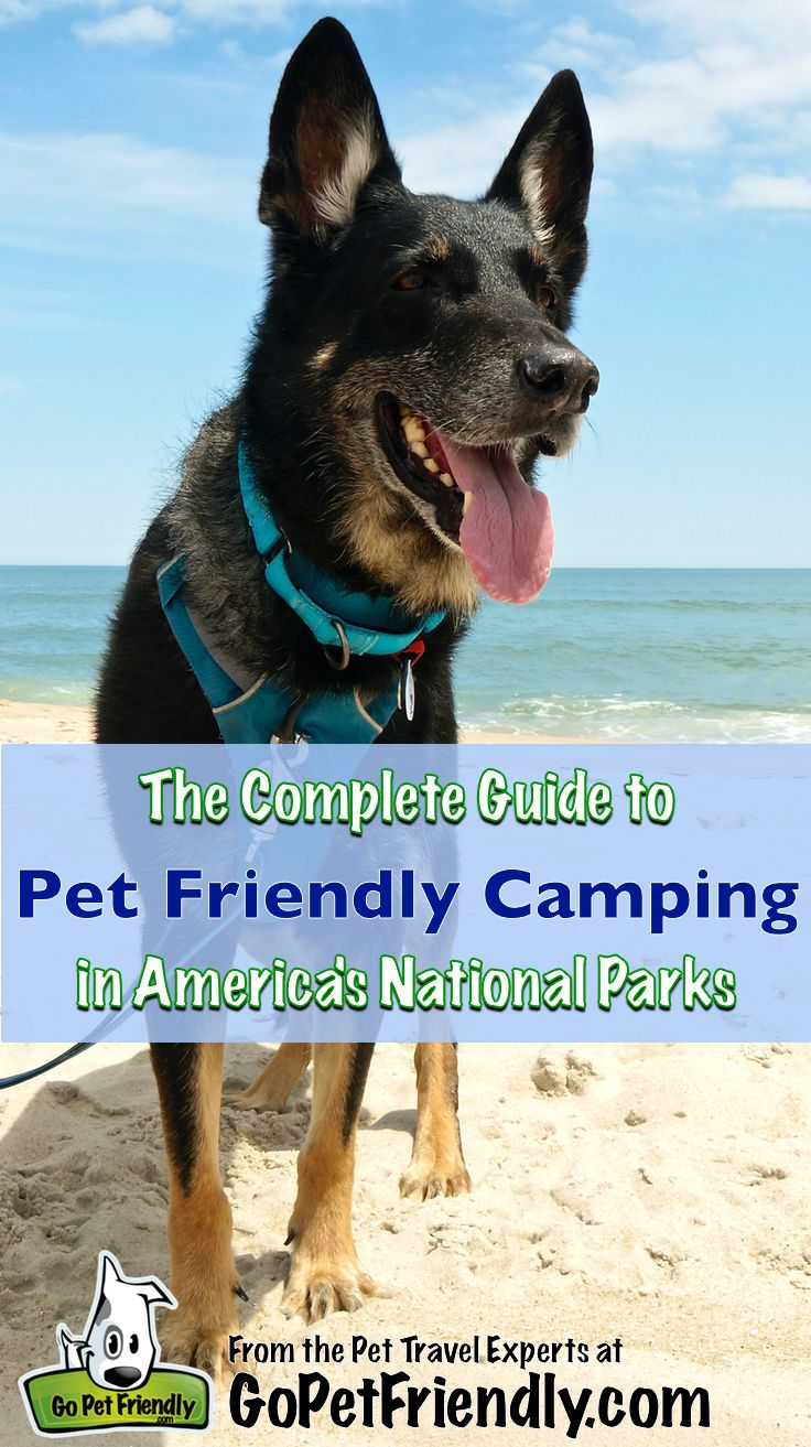 The Complete Guide To Pet Friendly Campgrounds In Americas National Park