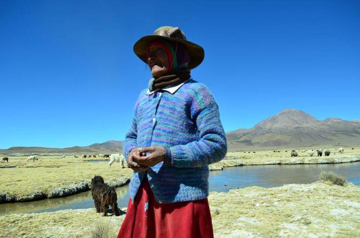 Nicasia Calisaya es una ganadera de Paquisa, cerca del Salar de Surire, en los alrededores de Guallatire en la comuna de Putre. Chile.