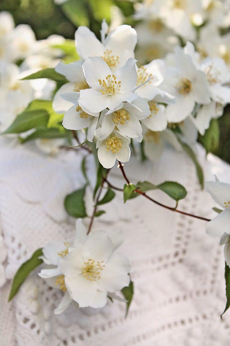 290 best f l o w e r images on pinterest beautiful flowers