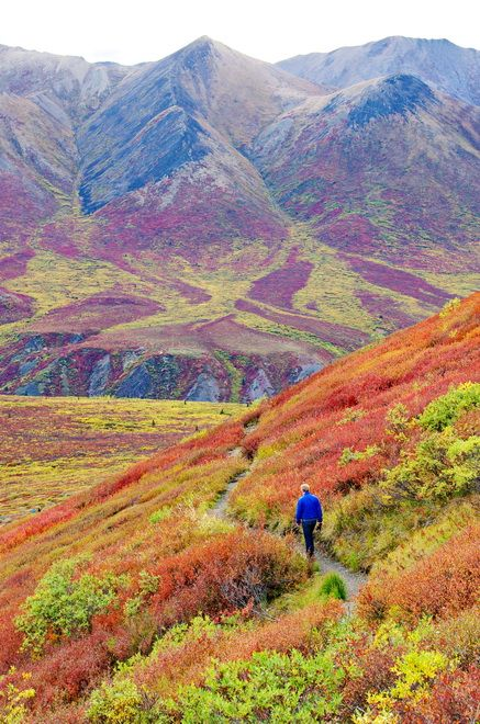 The Goldensides Hike in Tombstone Territorial Park, Yukon. Canada -Fall travel in the Yukon is beautiful!