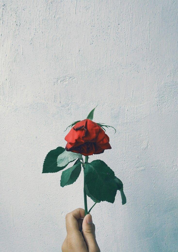 Mawar yang layu  Little Peace di 2019  Cinta adalah