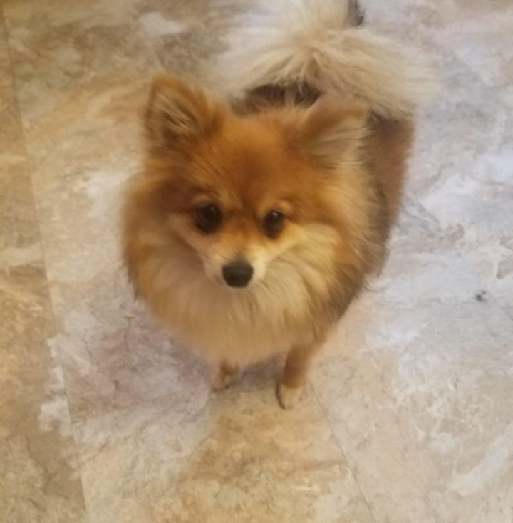 Adopt Maggie On Petfinder In 2020 Dog Adoption Homeless Pets Help Homeless Pets