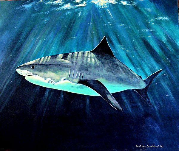 Shark Painting by Paul SANDILANDS                                                                                                                                                                                 More