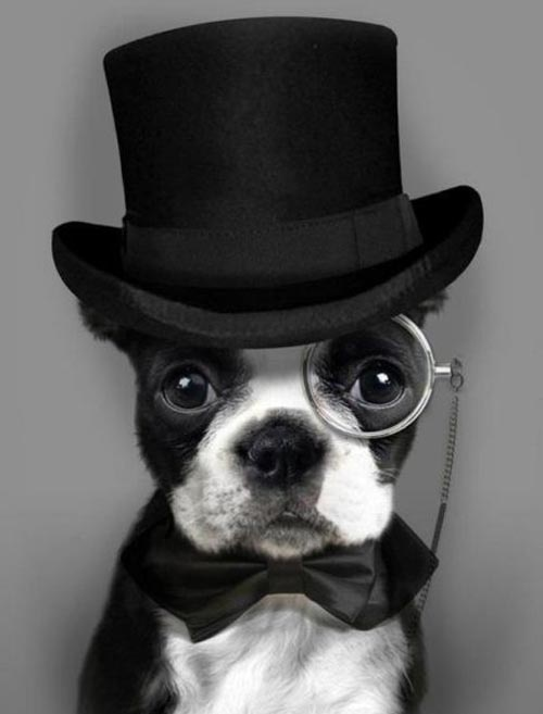 bow tie and top hat
