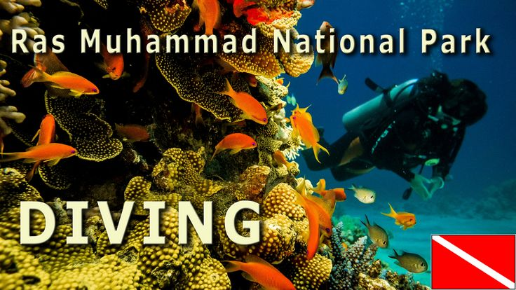 Our photocast: Diving in Ras Muhammed National Park, Egypt http://youtu.be/9kNlsSPmKbc {Nurkowanie w Parku Narodowym Ras Muhammed} http://youtu.be/9kNlsSPmKbc #Egypt #Egipt #diving #Ras #Muhammed
