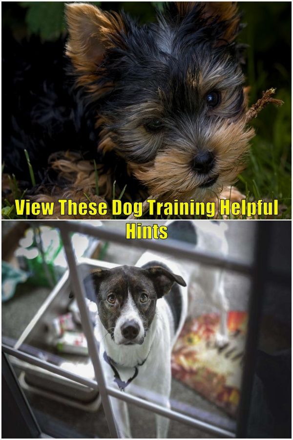 Smart Dog Training In 2020 Dog Advice Training Your Dog Smart Dog