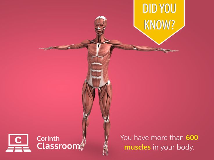 Go muscles go!