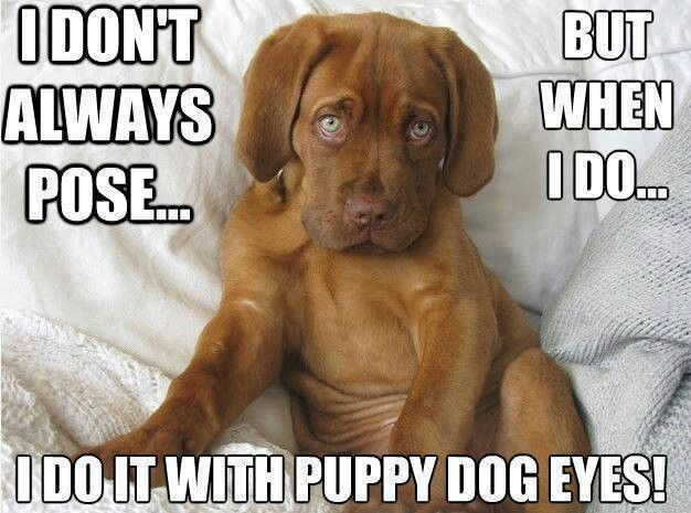 So darn cute. All about dogs! Dogs, French mastiff dog