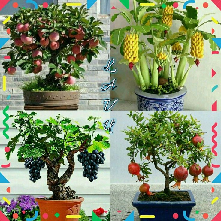 container gardening ideas for patio # ...