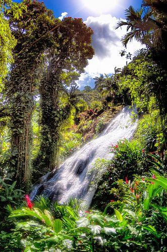Shaw Park Gardens - Ocho Rios, Jamaica. Schöner Traum wenn es draußen kalt und dunkel ist...