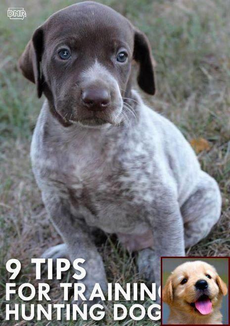 Mydogmakesmehappy Happydoghappylife Dogsrulstheworld