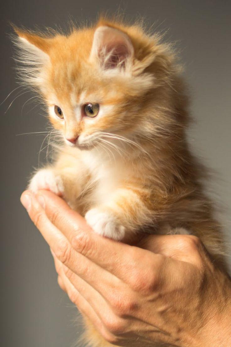 OMG .... sooo cute kitty #cat cute fluffy AWW