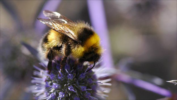 Bees change their flight paths in mathematically predictable ways to avoid predators such as spiders.