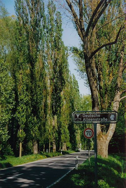 Portion of the German Avenue Road near Lake Constance