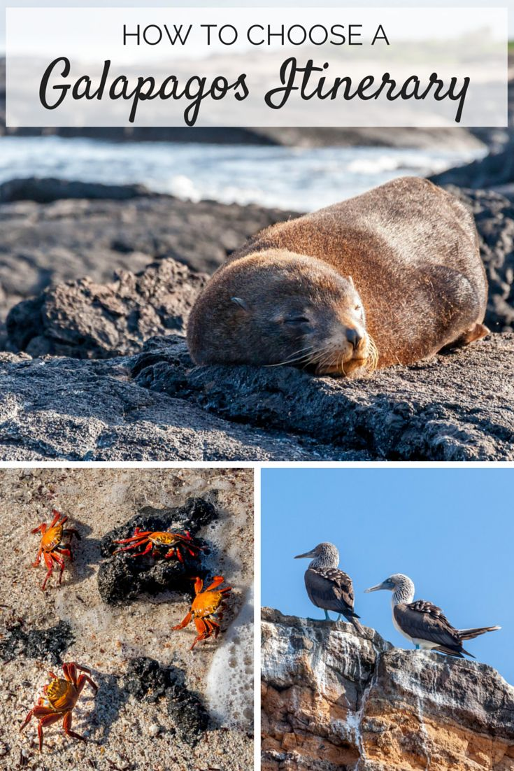 A trip to the Galapagos is the adventure of a lifetime. Tips for deciding how to visit the Galapagos and where to go.