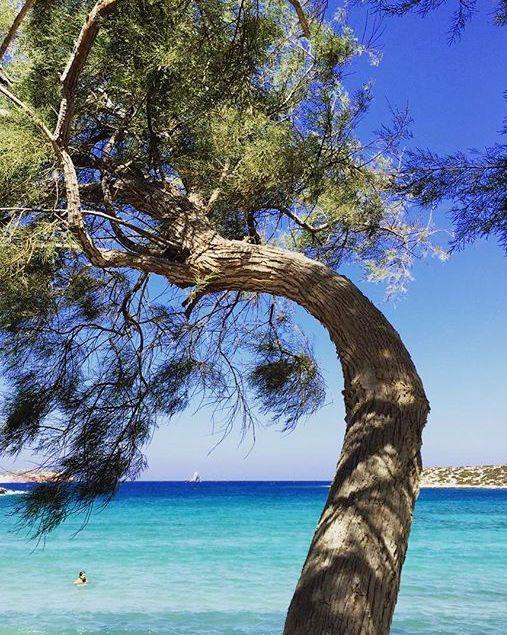 Que faire à Paros ? - Grèce Cyclades Paros