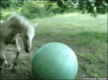 Animals doing their thing Part 2 - Imgur